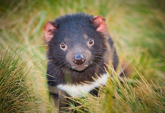 devils-cradle-tasmanian.jpg