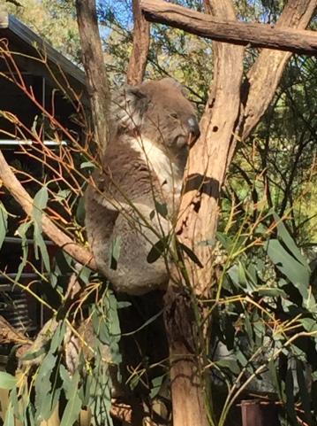 gorge wildlife3