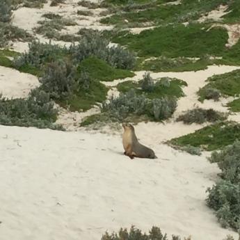 Kangaroo Island2