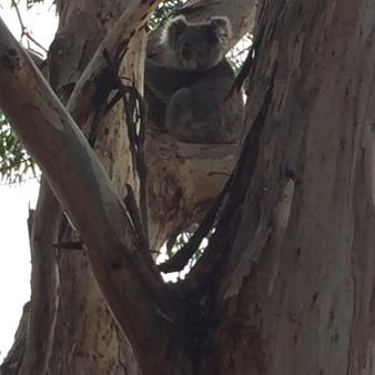 Kangaroo Island4